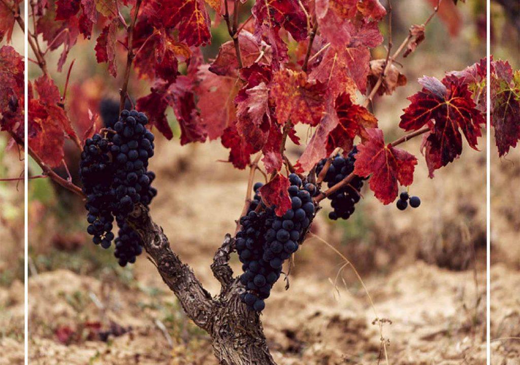 La Cosecha de Rioja